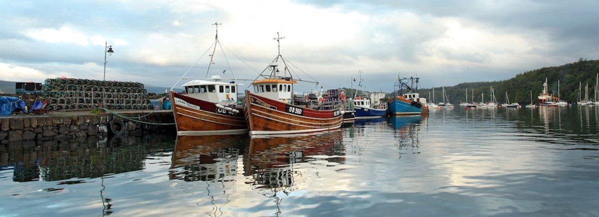 Tobermory harbour